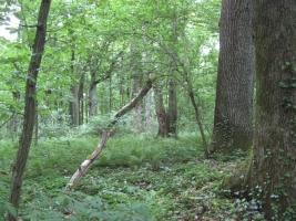 Gozdni rezervat Babji ložič pri Ljutomeru