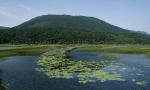 Rastline vrste blatnik označujejo pot Stržena proti Rešetu.