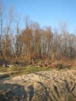 Ostanki poplavnega gozda