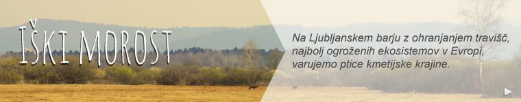 NR_IskiMorost_Link_760x150