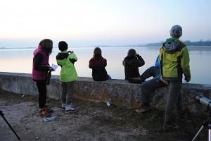 Zaradi redkih zimskih gostov je največ pozornosti pritegnilo Ptujsko jezero. foto: Mojca Podletnik