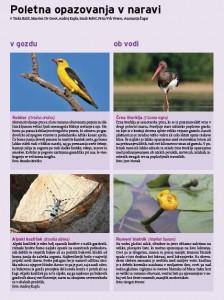 Nasveti za poletna opazovanja v naravi.