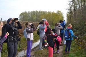 Opazovanje ptic, foto: Anja Ivanuš