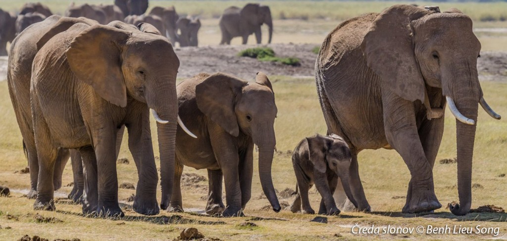 2017_20_2_herd_of_elephants