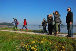 Opazovanja ptic na Gajševskem jezeru se je udeležilo 15 ljudi. foto: Gregor Domanjko