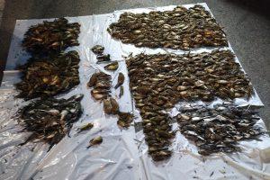 Skupno je bilo najdenih 1349 osebkov ptic, ki so pripadale 13 vrstam. Foto: Tjaša Zagoršek