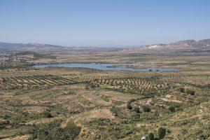 Pokrajina v okolici Enfide je prepredena z oljćnimi nasadi, pašniki in občasnimi, večinoma polslanimi jezeri. Foto: Tilen Basle
