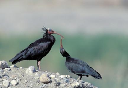 foto_birdlife_ogrozene_2_arhiv_birdlife_international