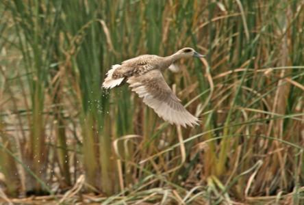 foto_birdlife_viri_1_arhiv_nature_iraq