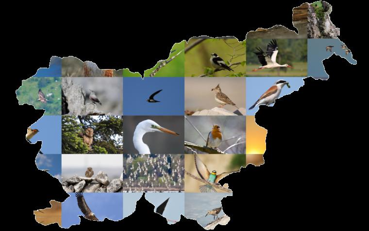 Ptice Slovenije