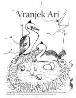 2013, Vranjek Ari (pobarvanka)