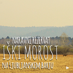 NR_IskiMorost_Link_244x244
