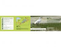 2010, Zeleno srce Kopra: vodnik po naravnem rezervatu Škocjanski zatok