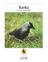 2000, Kavka, ptica leta 2000