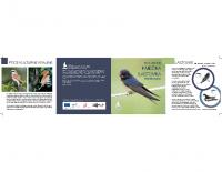 2010, Ptica leta 2010: Kmečka lastovka
