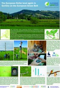 Predstavili smo sodelovanje med slovenskimi in avstrijskimi ornitologi na Goričkem. Uspeh skupnih aktivnosti ni izostal - letos je namreč tukaj prvič po 9 letih v Sloveniji ponovo uspešno gnezdila zlatovranka.