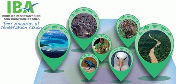 Najbolj ogrožena mednarodno pomembna območja za ptice na svetu