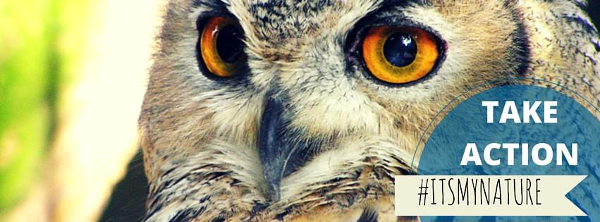 Owl_Take Action