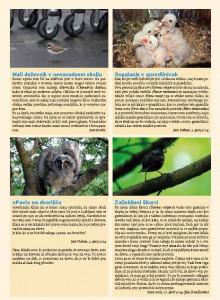 Kratke zanimive dogodivščine s pticami