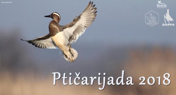Ptičarijada 2018 – dogodek, ki ga nikakor ne smete zamuditi