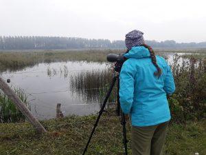 Najštevilčnejše vrste v Ormoških lagunah so bile pritlikavi kormorani, liske in mlakarice. Foto: Eva Horvat