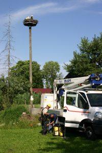 Preden smo se povzpeli do gnezda, smo poskrbeli za varnost. Foto: Damijan Denac