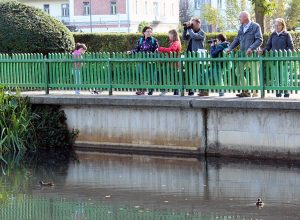 V parku Tivoli v Ljubljani smo spoznavali vrste ptic, ki so se nekoliko bolj približale ljudem. Foto: Saša Eržen