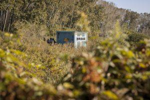 NR Ormoške lagune so bile odete v jesenske barve. Foto: Eva Horvat