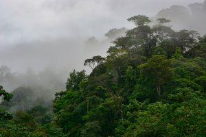 Jutranje meglice se vlečejo čez tropski deževni gozd V NARODNEM PARKU PIEDRAS BLANCAS.