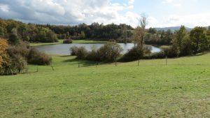 Malo Zagorsko jezero je eno izmed pivških pogosteje pojavljajočih se presihajočih jezer. Leži na obrobju terase ob reki Pivki med naseljema Zagorje in Drskovče. V njegovi bližini sta Veliko Zagorsko in Veliko Drskovško jezero. foto: Tina Kirn