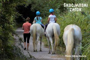 Sprehodi s kamarškimi konji, foto: Mirko Kastelic
