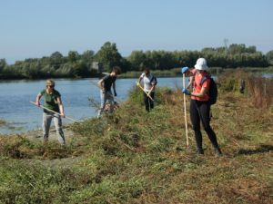 Odstranjevanje vegetacije na prodnatem otoku 1. Foto: Alen Ploj