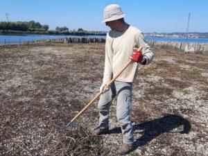 Luka med grabljenjem še zadnjih ostankov vegetacije na prodnatem otoku 1. Foto: Urša Gajšek